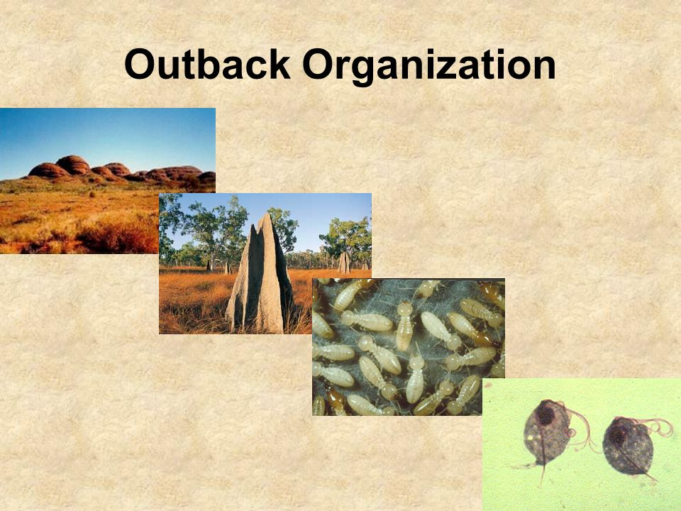 Outback Organization