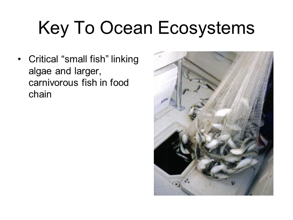 Key To Ocean Ecosystems