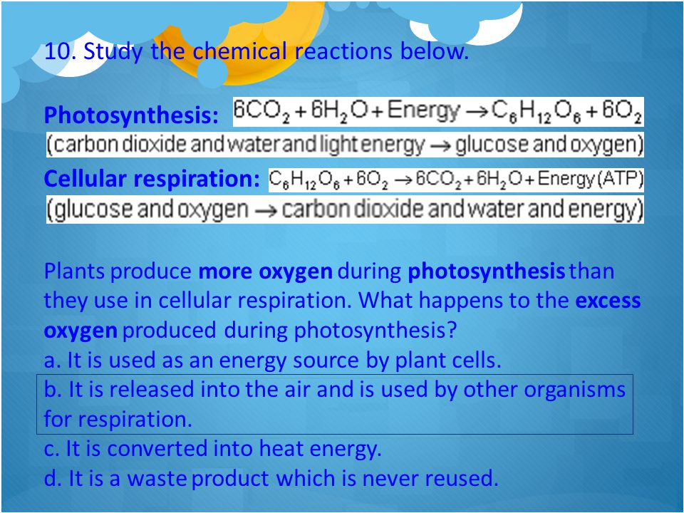 10. Study the chemical reactions below. Photosynthesis: