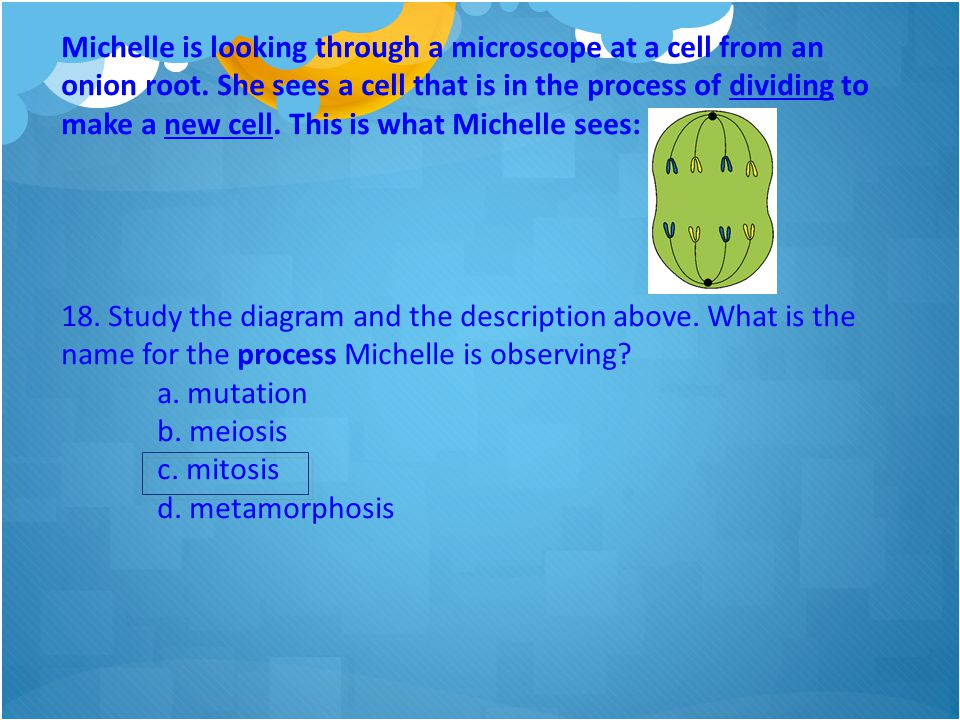 Michelle is looking through a microscope at a cell from an onion root