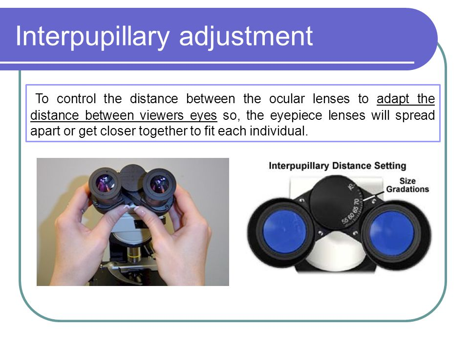 Interpupillary adjustment