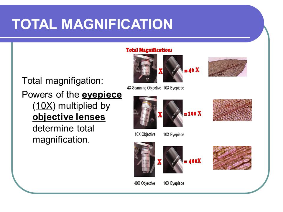 TOTAL MAGNIFICATION Total magnifigation: