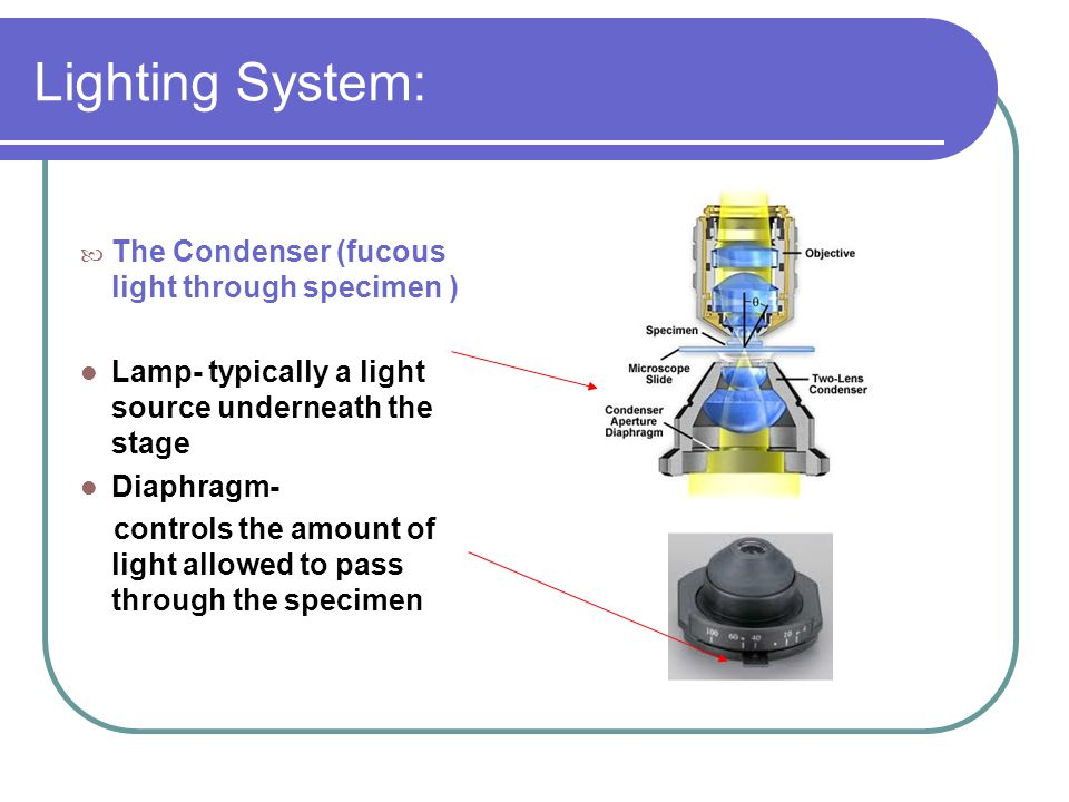 Lighting System: The Condenser (fucous light through specimen )