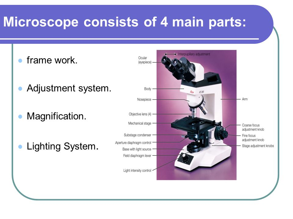 Microscope consists of 4 main parts: