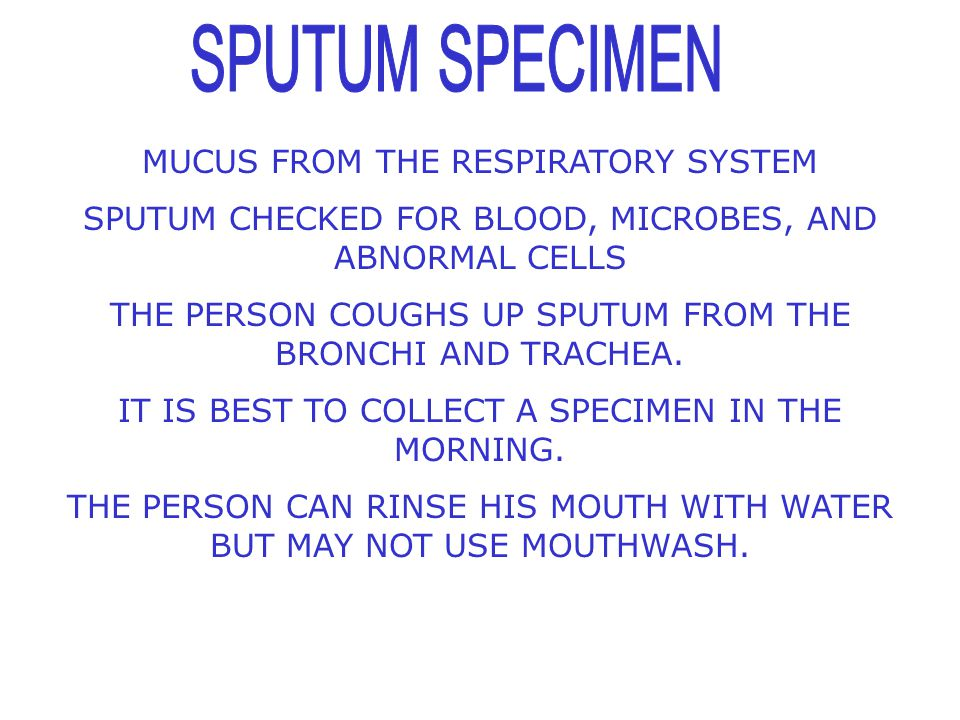 SPUTUM SPECIMEN MUCUS FROM THE RESPIRATORY SYSTEM
