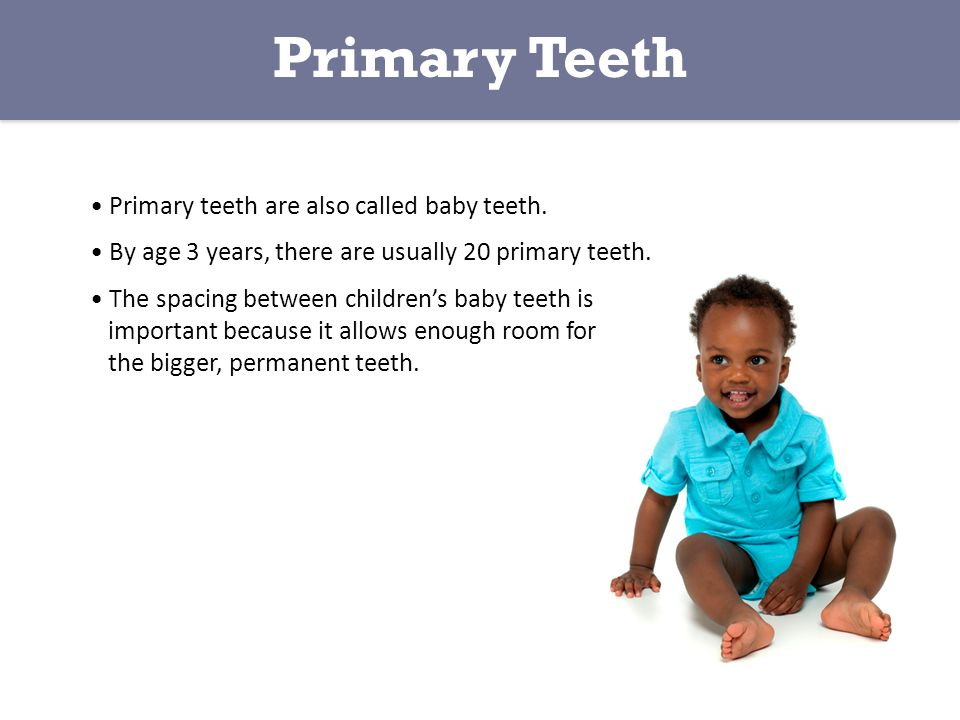 Primary Teeth • Primary teeth are also called baby teeth.