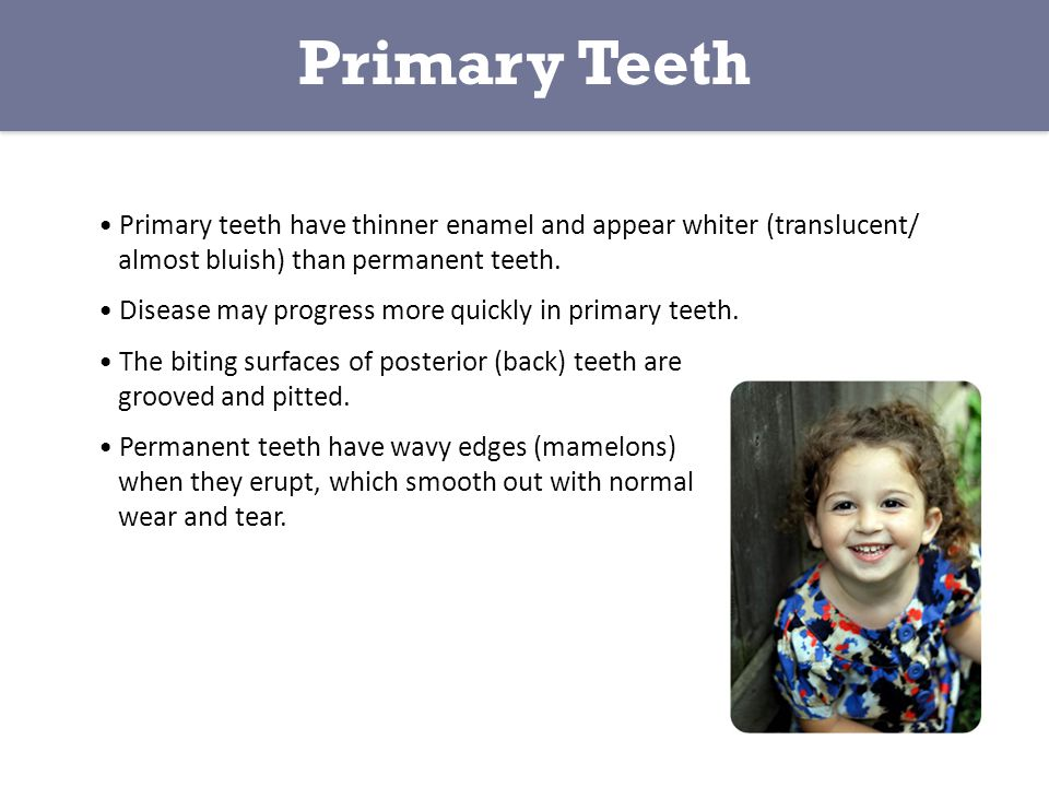 Primary Teeth • Primary teeth have thinner enamel and appear whiter (translucent/ almost bluish) than permanent teeth.
