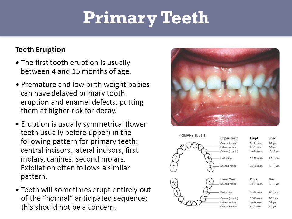 Primary Teeth Teeth Eruption