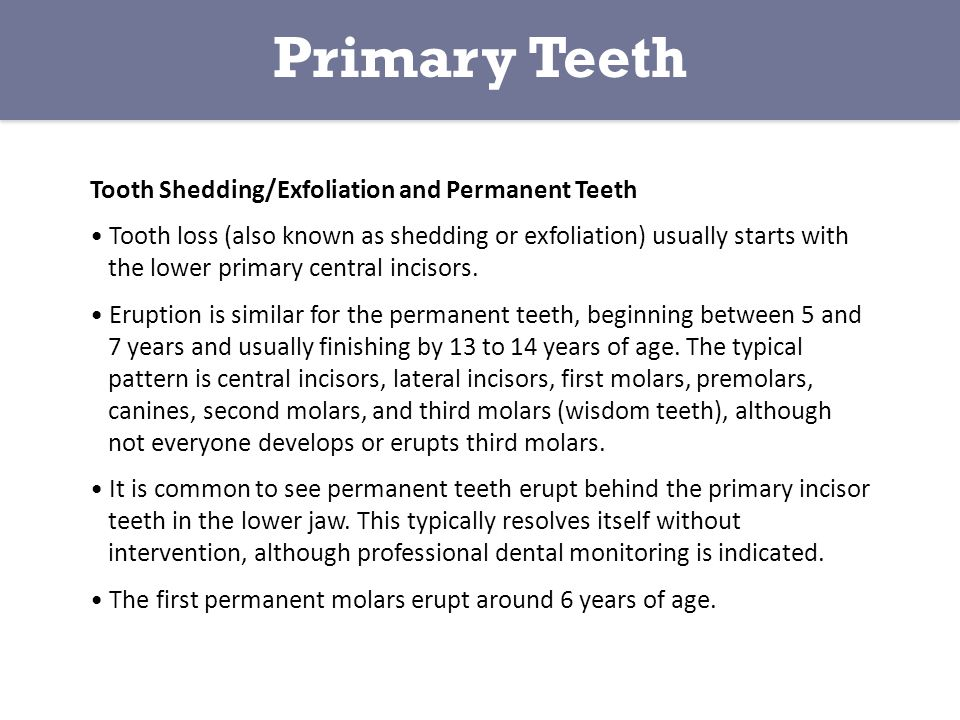 Primary Teeth Tooth Shedding/Exfoliation and Permanent Teeth