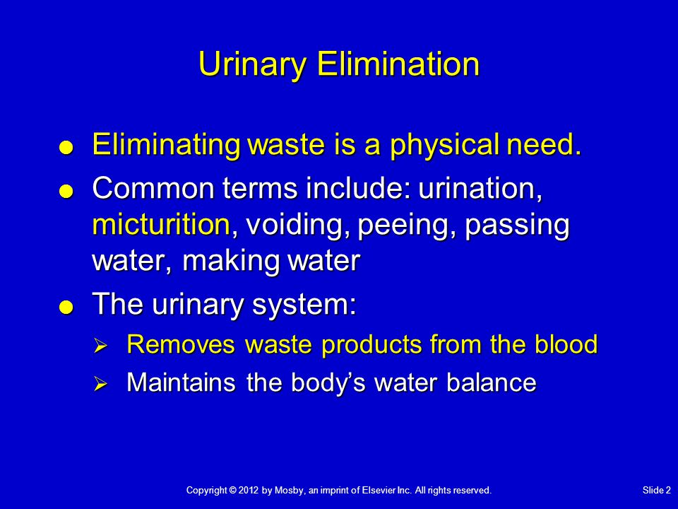 Urinary Elimination Eliminating waste is a physical need.