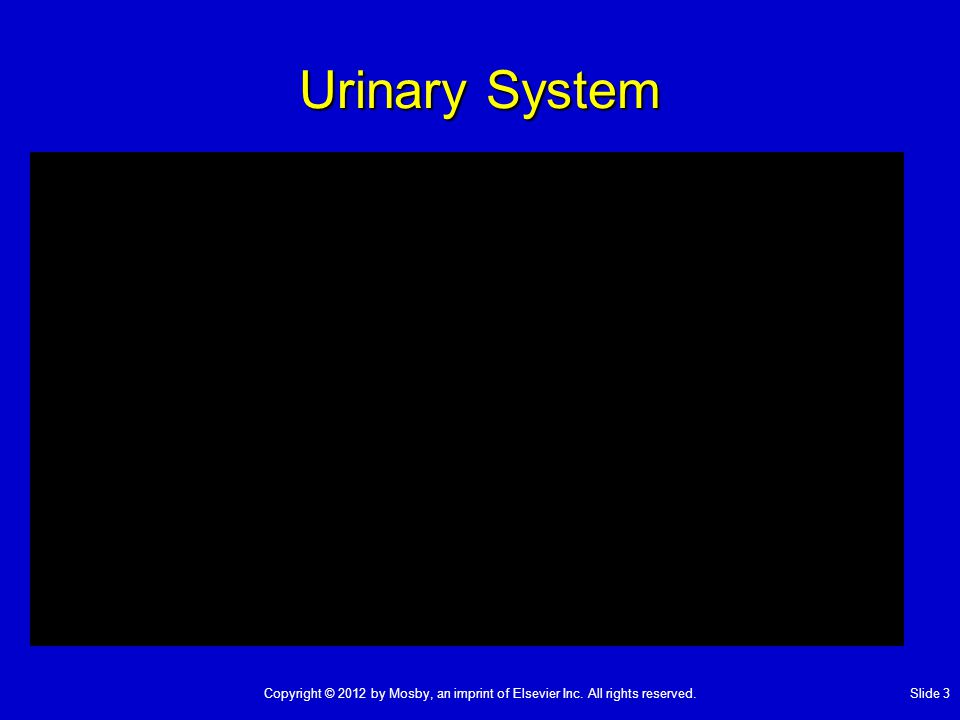 Urinary System Copyright © 2012 by Mosby, an imprint of Elsevier Inc. All rights reserved.