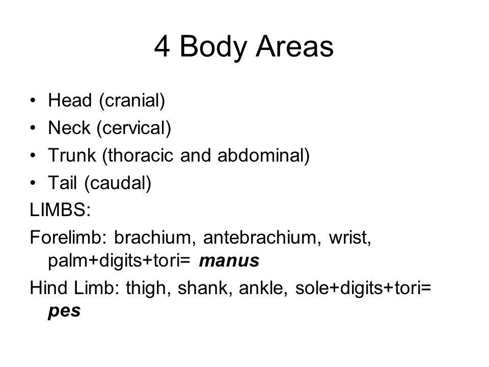 4 Body Areas Head (cranial) Neck (cervical)