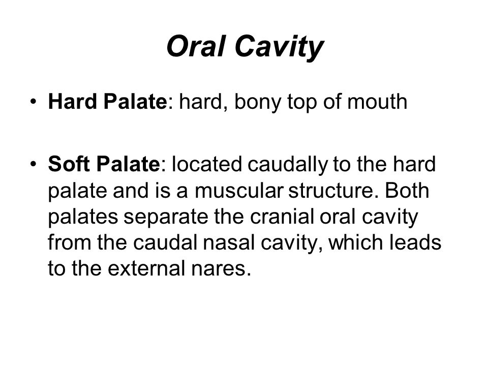 Oral Cavity Hard Palate: hard, bony top of mouth