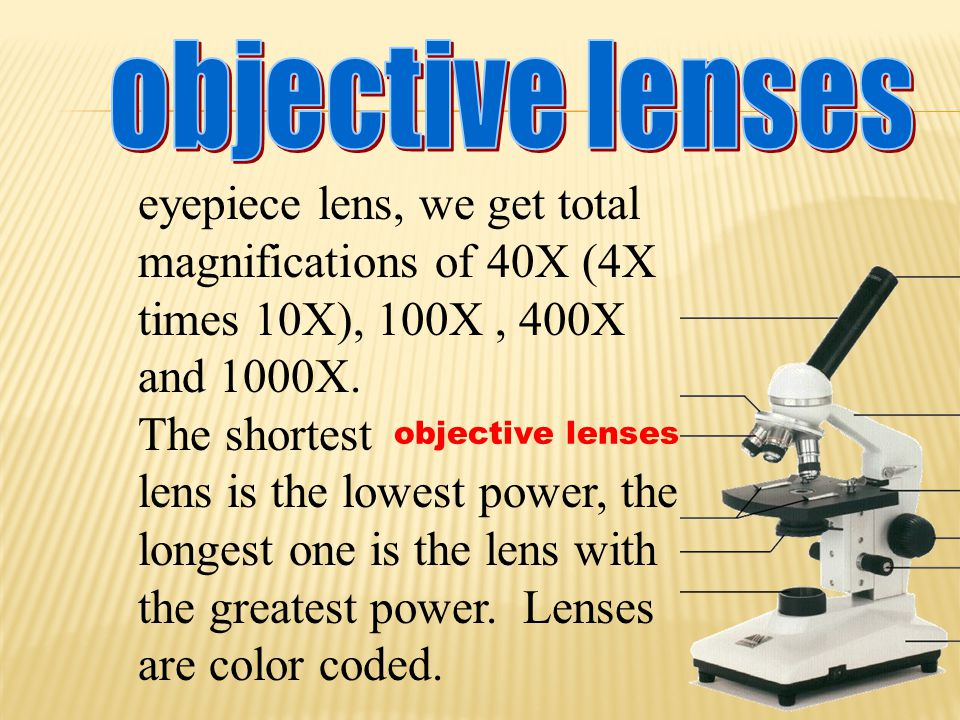objective lenses eyepiece lens, we get total magnifications of 40X (4X times 10X), 100X , 400X and 1000X.