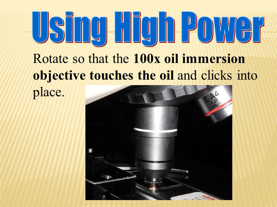 Using High Power Rotate so that the 100x oil immersion objective touches the oil and clicks into place.