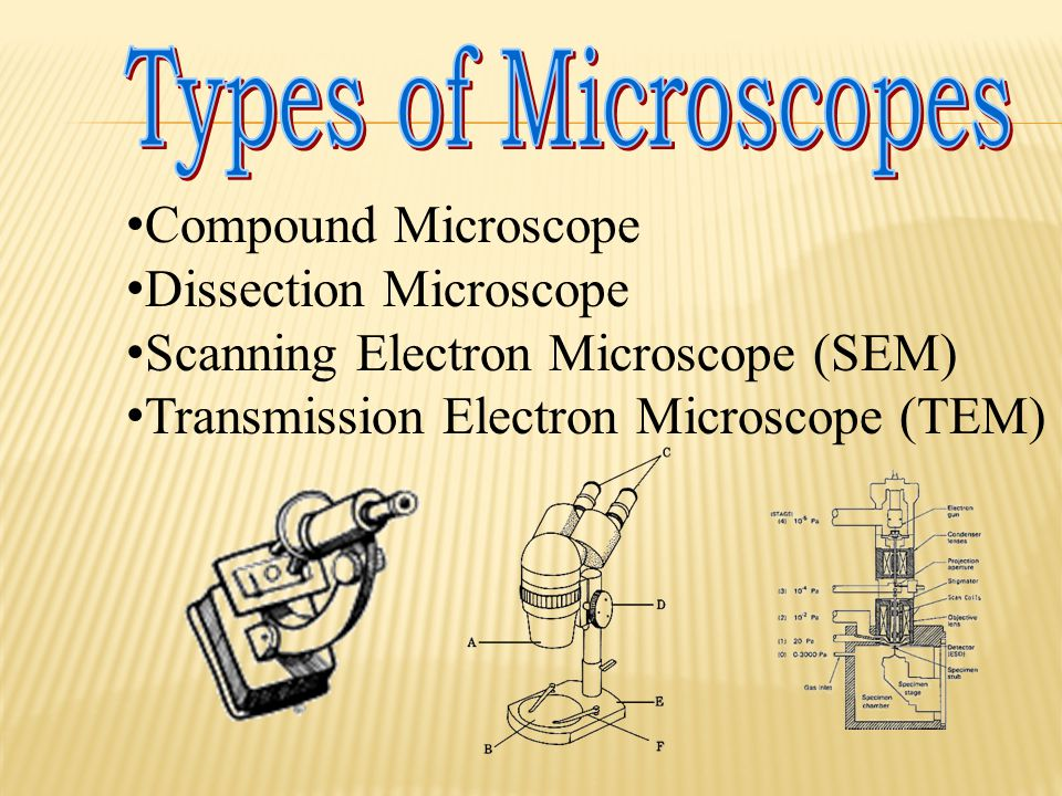 Types of Microscopes Compound Microscope. Dissection Microscope. Scanning Electron Microscope (SEM)