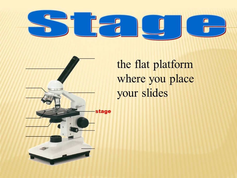 the flat platform where you place your slides
