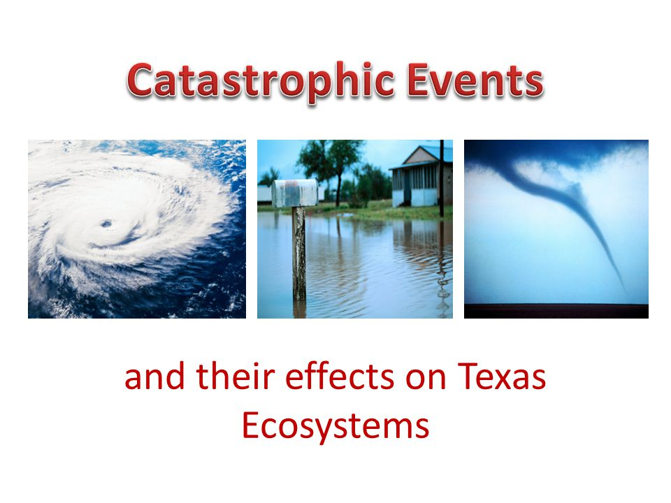 and their effects on Texas Ecosystems