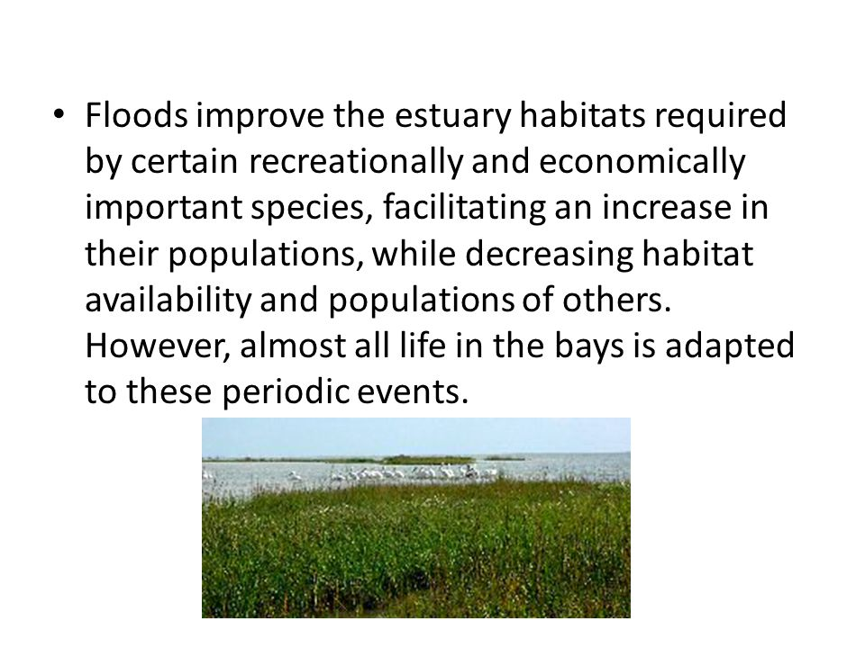 Floods improve the estuary habitats required by certain recreationally and economically important species, facilitating an increase in their populations, while decreasing habitat availability and populations of others.