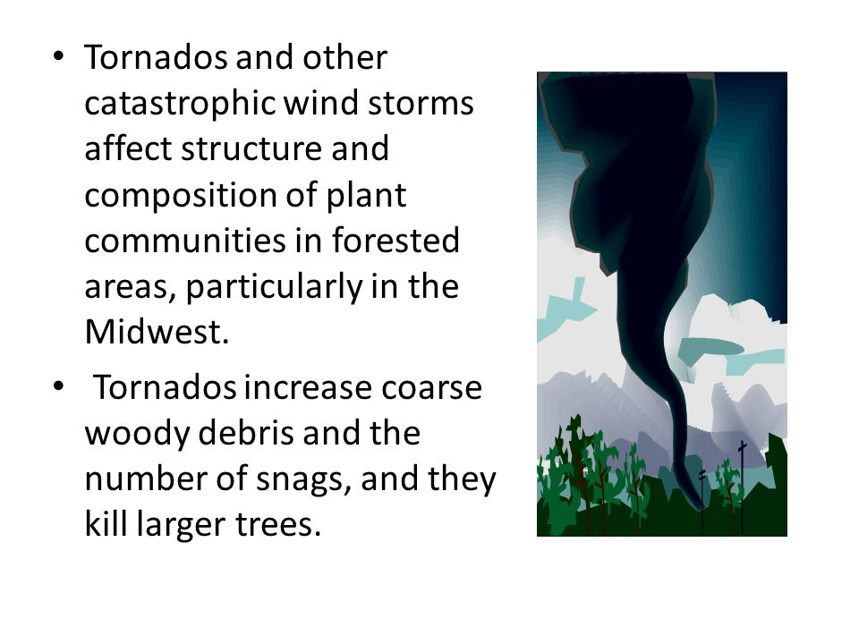 Tornados and other catastrophic wind storms affect structure and composition of plant communities in forested areas, particularly in the Midwest.