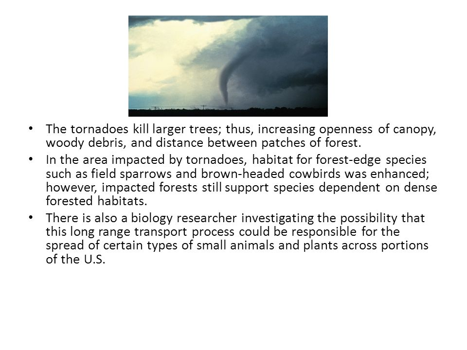 The tornadoes kill larger trees; thus, increasing openness of canopy, woody debris, and distance between patches of forest.