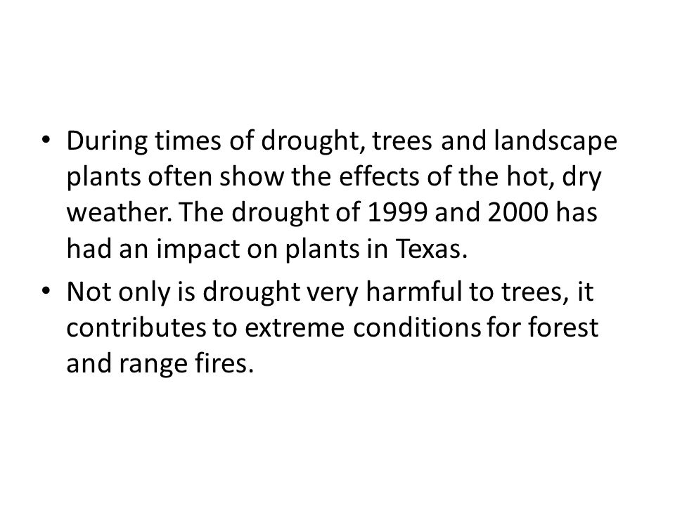 During times of drought, trees and landscape plants often show the effects of the hot, dry weather. The drought of 1999 and 2000 has had an impact on plants in Texas.