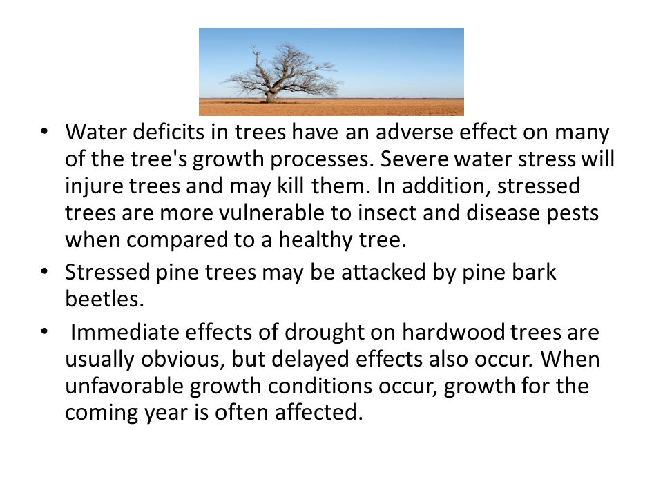Water deficits in trees have an adverse effect on many of the tree s growth processes. Severe water stress will injure trees and may kill them. In addition, stressed trees are more vulnerable to insect and disease pests when compared to a healthy tree.