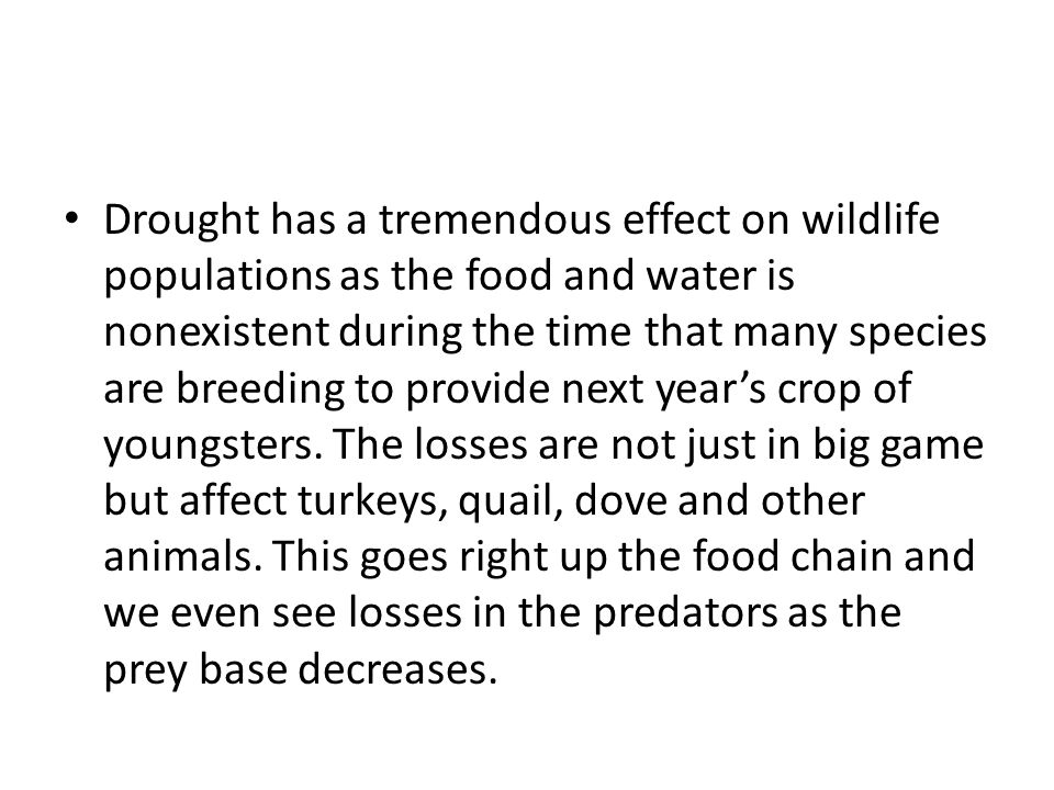 Drought has a tremendous effect on wildlife populations as the food and water is nonexistent during the time that many species are breeding to provide next year's crop of youngsters.