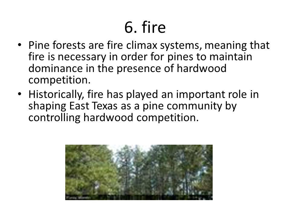 6. fire