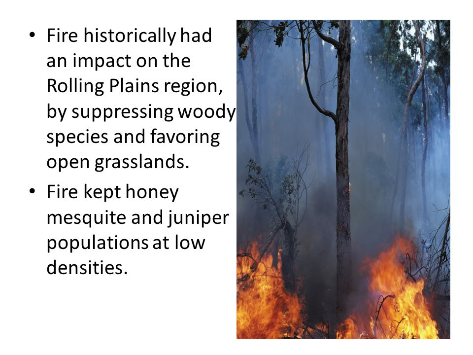 Fire historically had an impact on the Rolling Plains region, by suppressing woody species and favoring open grasslands.