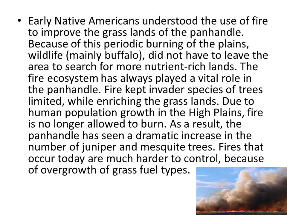 Early Native Americans understood the use of fire to improve the grass lands of the panhandle.