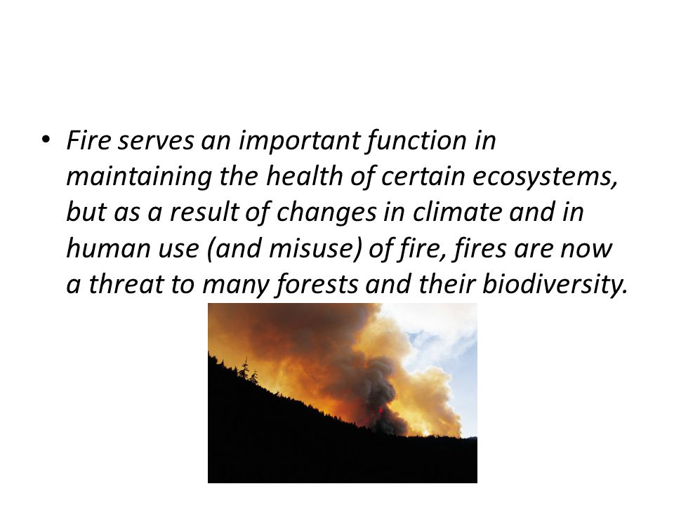 Fire serves an important function in maintaining the health of certain ecosystems, but as a result of changes in climate and in human use (and misuse) of fire, fires are now a threat to many forests and their biodiversity.