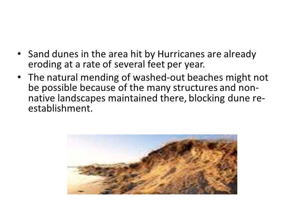 Sand dunes in the area hit by Hurricanes are already eroding at a rate of several feet per year.