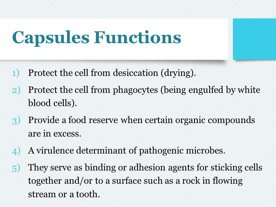 Capsules Functions Protect the cell from desiccation (drying).