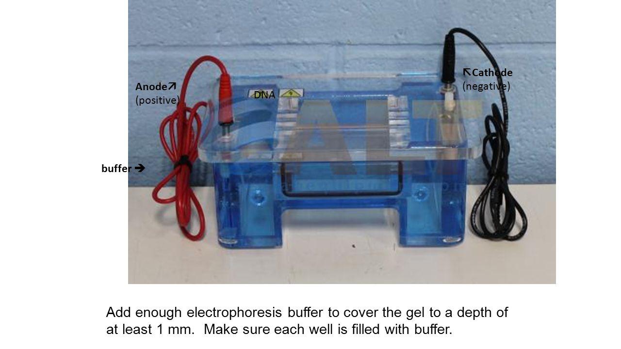 Cathode (negative) Anode (positive) DNA. buffer 
