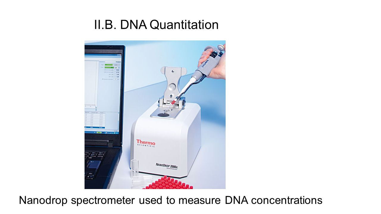 II.B. DNA Quantitation Nanodrop spectrometer used to measure DNA concentrations