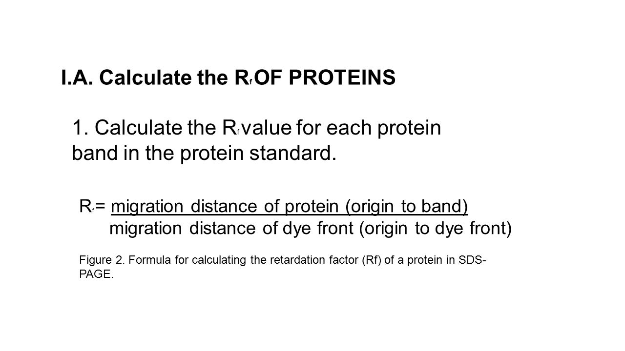 I.A. Calculate the Rf OF PROTEINS