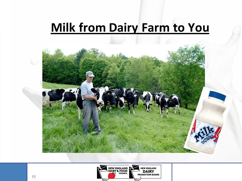 Milk from Dairy Farm to You