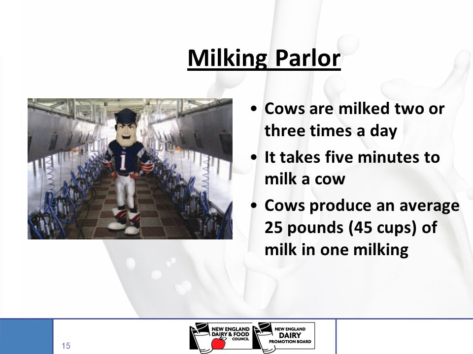 Milking Parlor Cows are milked two or three times a day