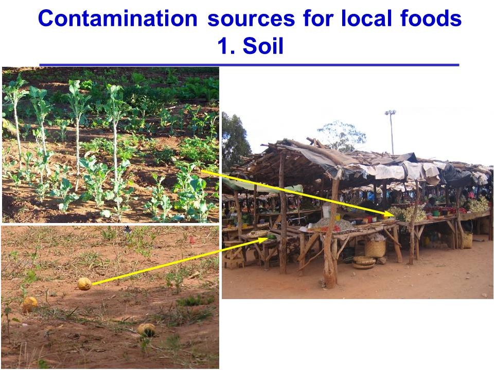 Contamination sources for local foods 1. Soil
