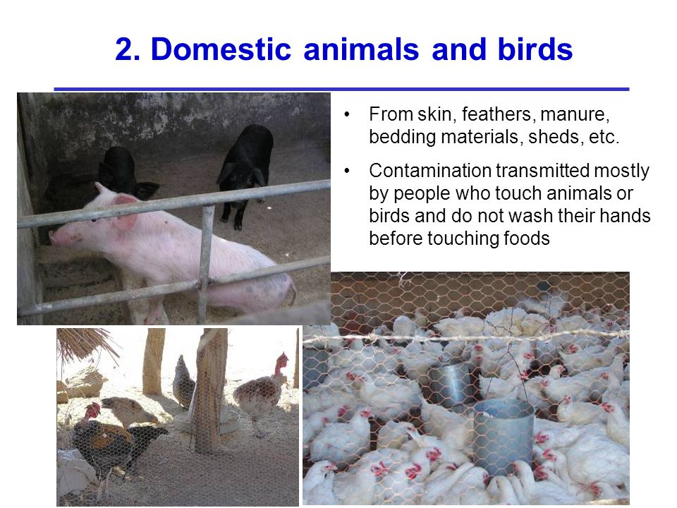 2. Domestic animals and birds