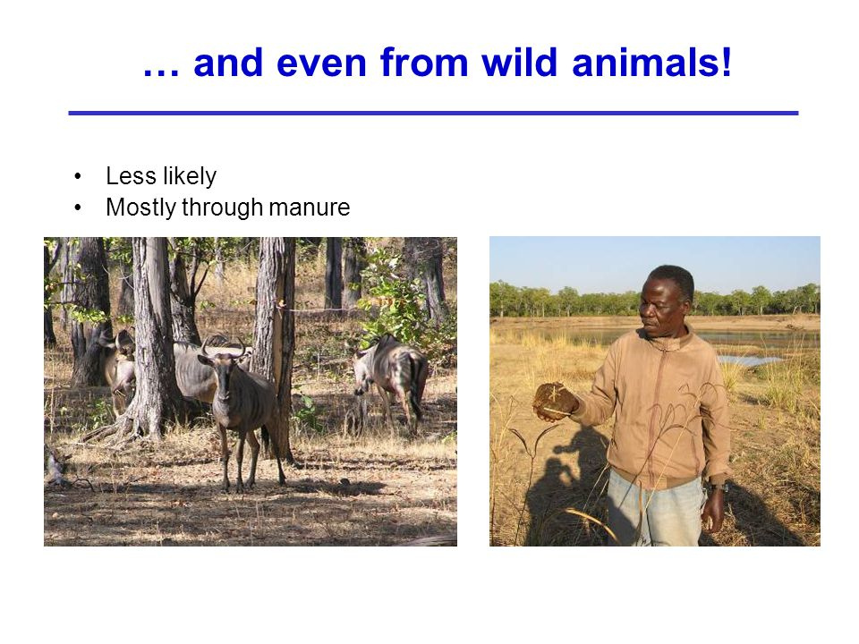 … and even from wild animals!