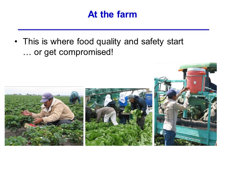 At the farm This is where food quality and safety start … or get compromised!