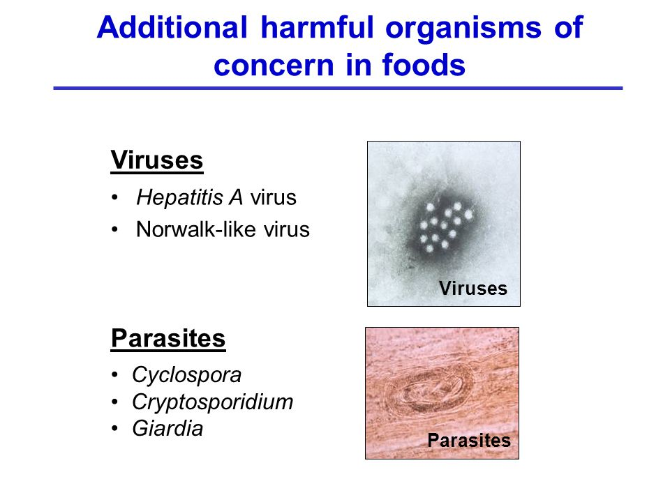 Additional harmful organisms of concern in foods