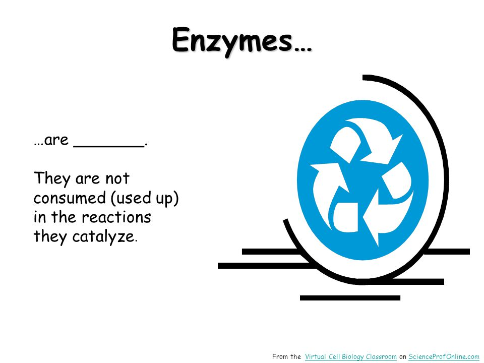 Enzymes… …are _______. They are not consumed (used up) in the reactions they catalyze. reusable.