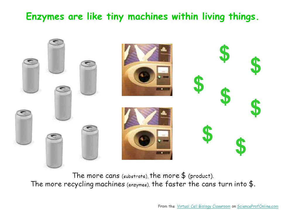 Enzymes are like tiny machines within living things.