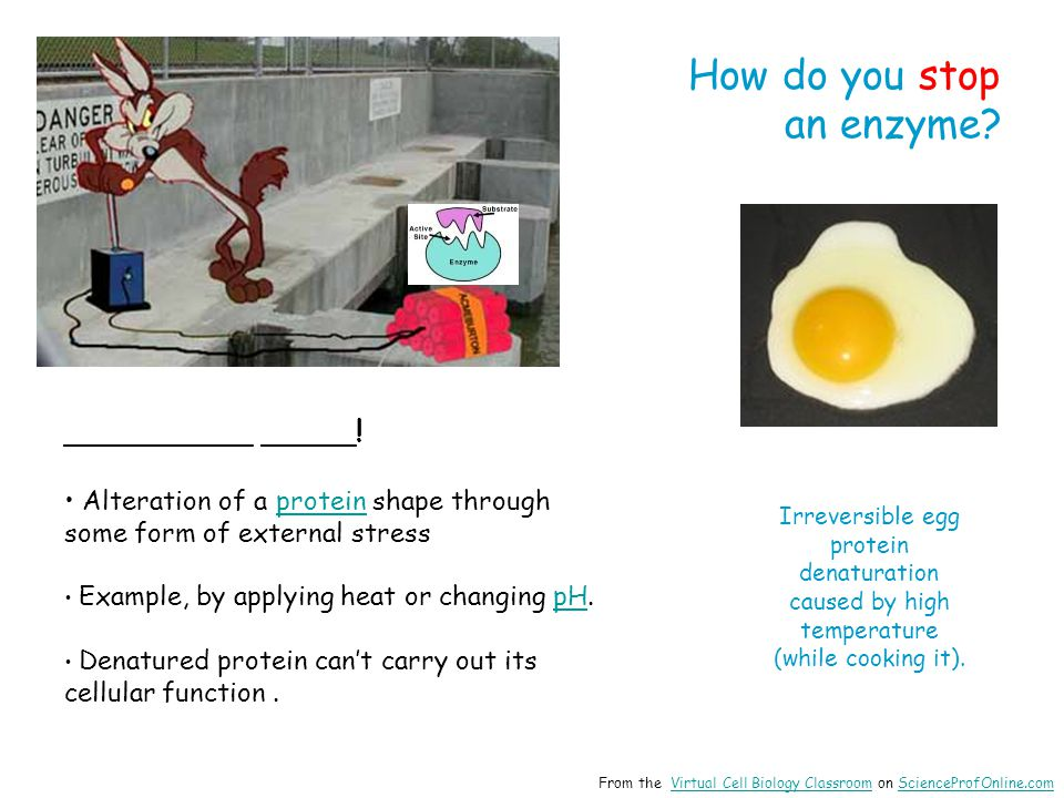 How do you stop an enzyme