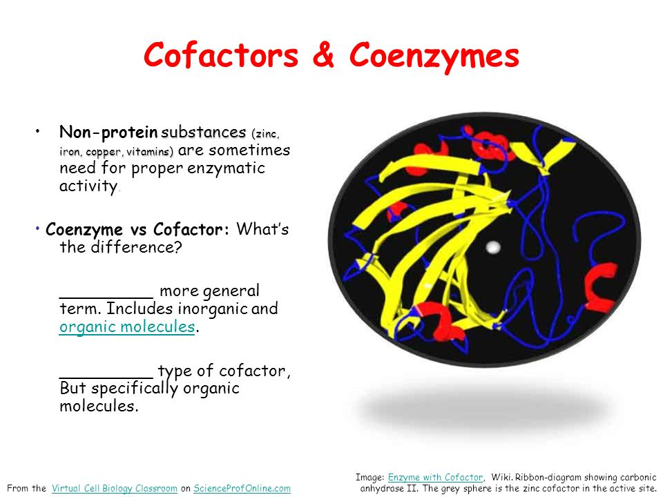 Cofactors & Coenzymes Non-protein substances (zinc, iron, copper, vitamins) are sometimes need for proper enzymatic activity.