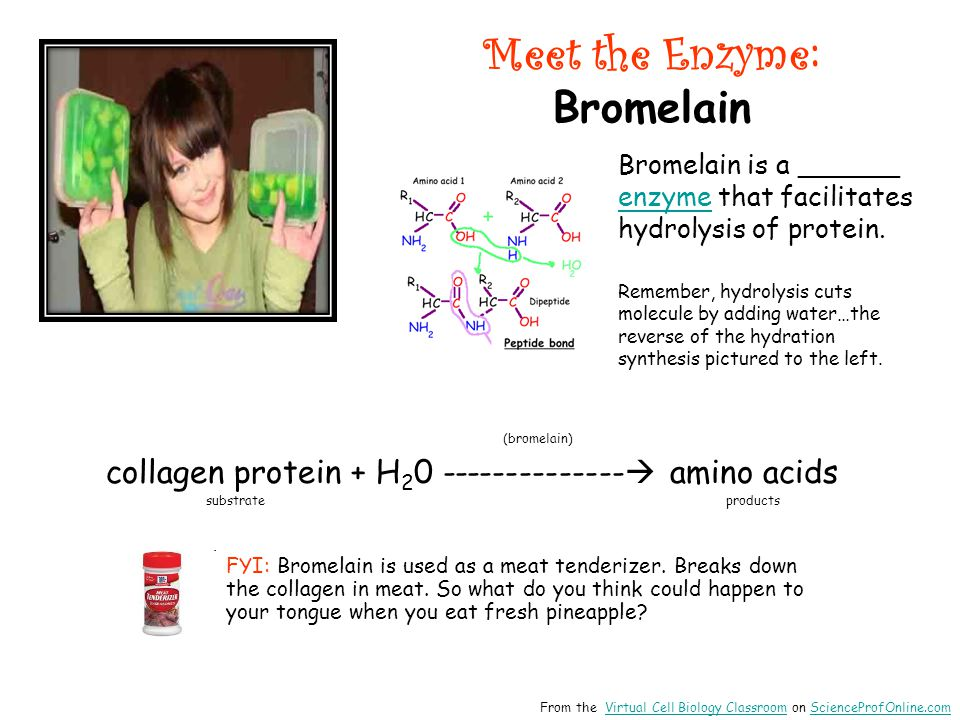 Meet the Enzyme: Bromelain