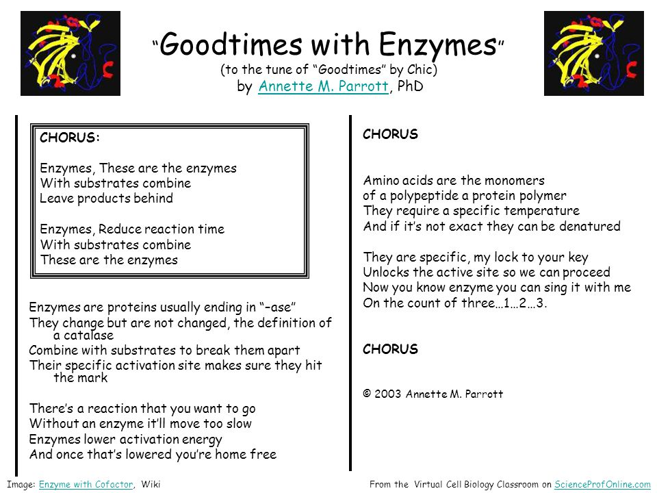Goodtimes with Enzymes (to the tune of Goodtimes by Chic) by Annette M. Parrott, PhD
